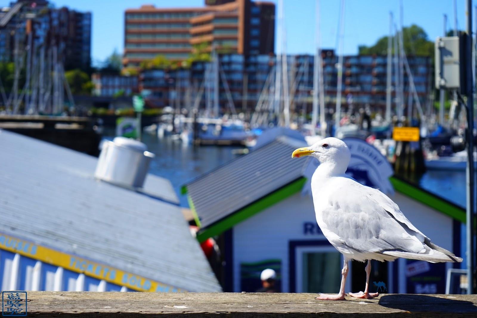 Le Chameau Bleu - Mouette de Granville Island - Vancouver