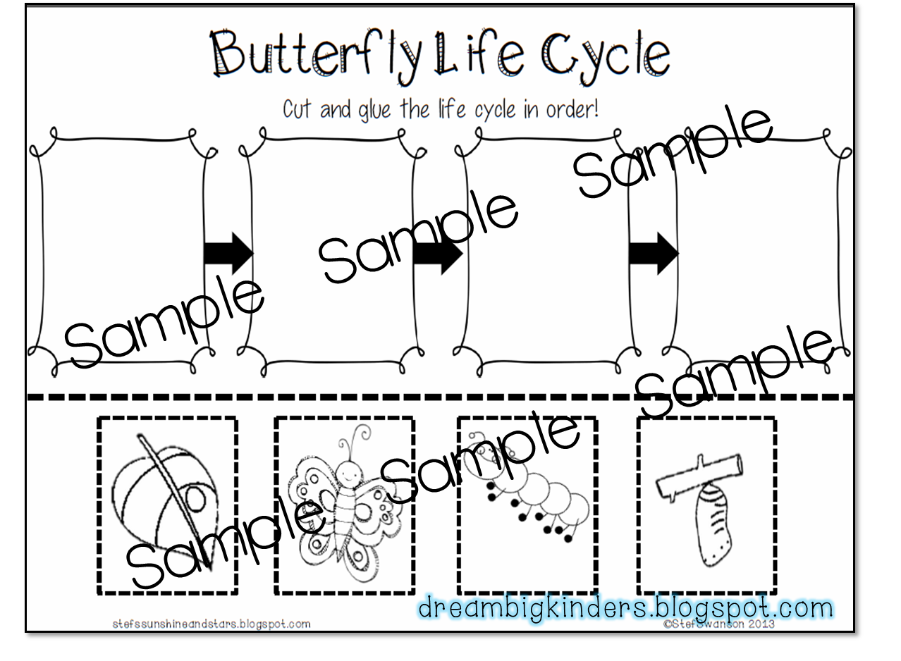 Butterfly Life Cycle Printable Worksheet Kindergarten