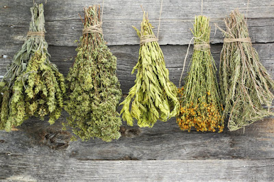 Η ΧΡΥΣΗ λίστα! 22 ελληνικά βότανα και τα εκπληκτικά οφέλη για την υγεία μας! Μην το προσπεράσεις…
