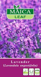 jual-benih-lavender.jpg