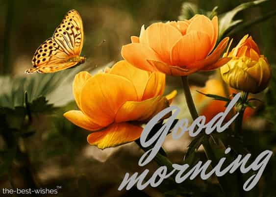 good morning flowers with background butterflies