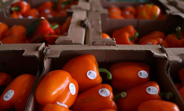 Peppers with high level of pesticides from Albania caught in Piraeus
