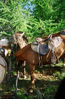 Mongolianhevonen, ratsastusmatka, Mongolia