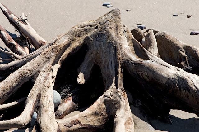 Nova Scotia; Hirtle's Beach; Driftwood