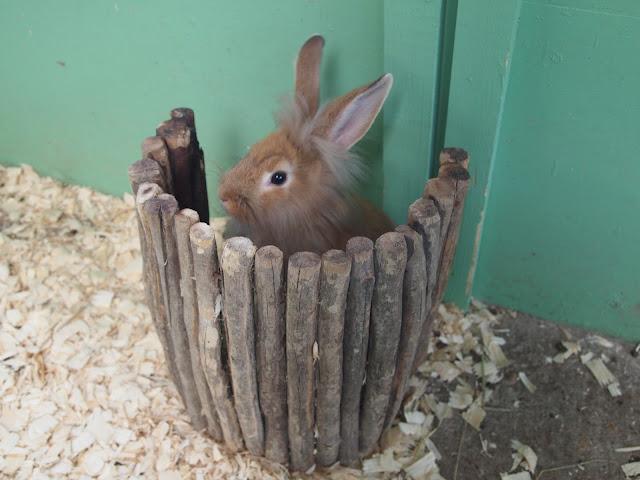 Godstone Farm, Surrey Review - Rabbit