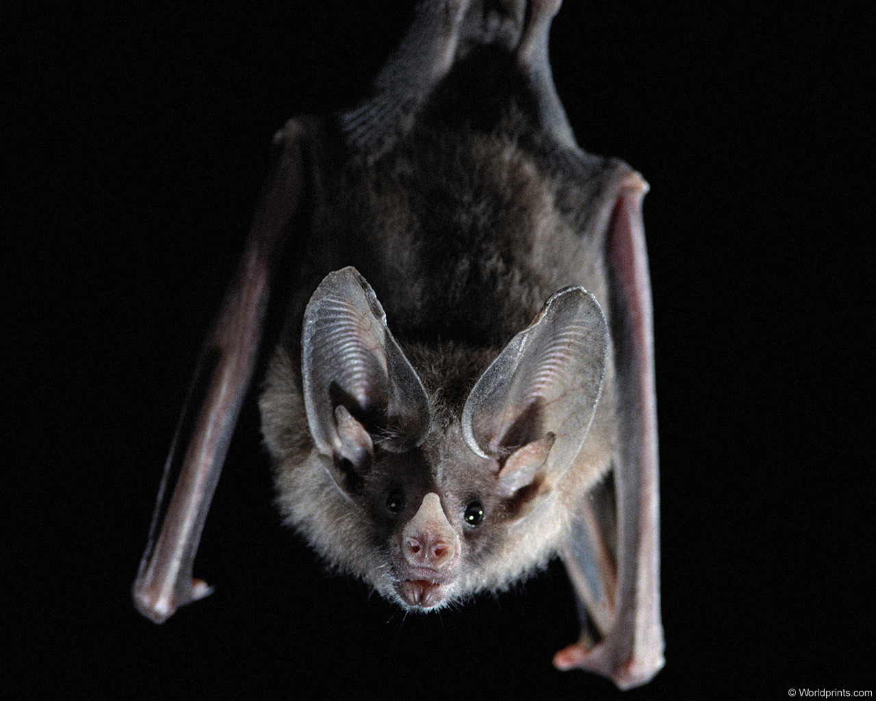 EVERYTHING YOU WANTED TO KNOW ABOUT BATS, BUT ARE TOO AFRAID
