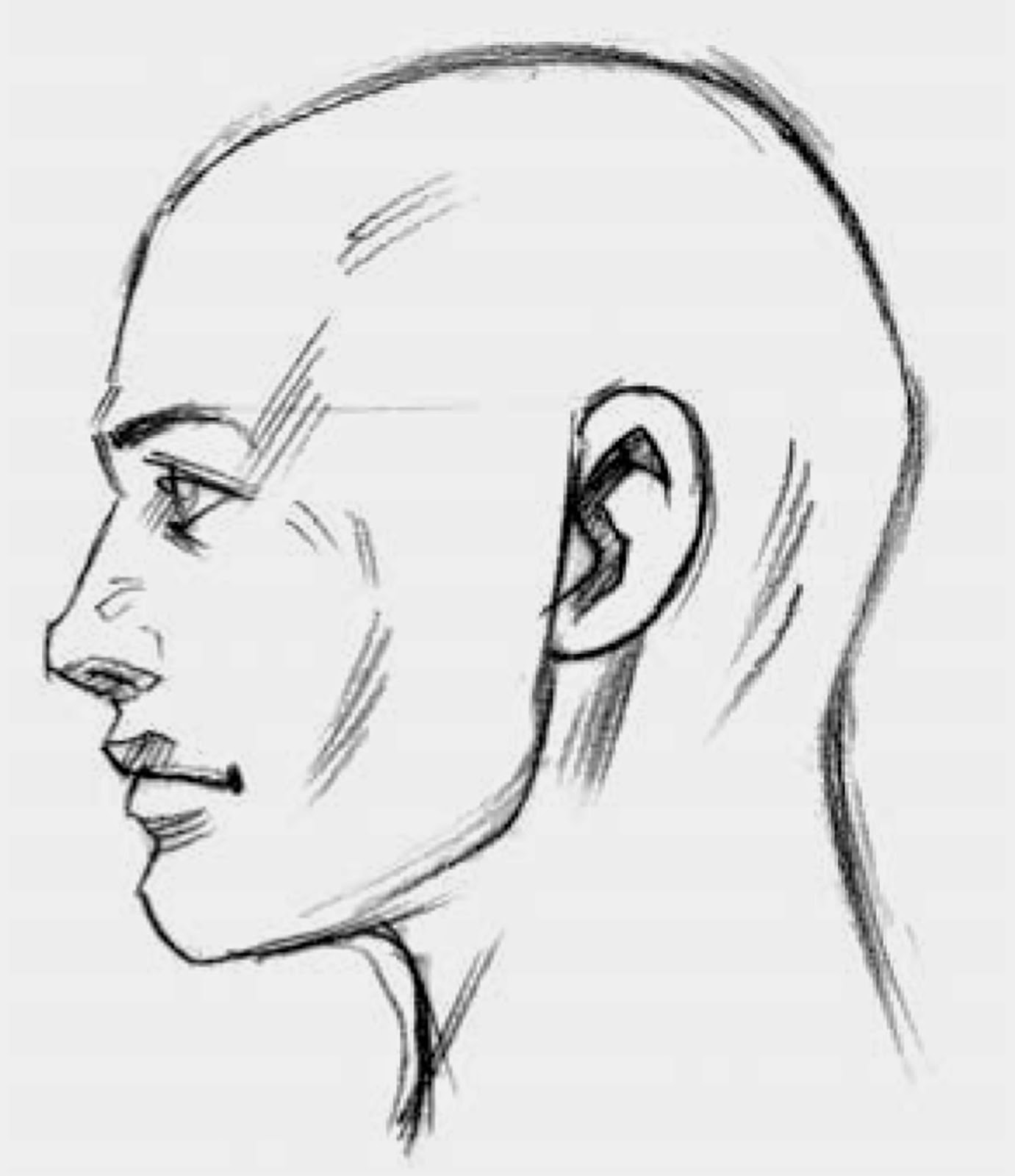 Drawings: Parts of the Head