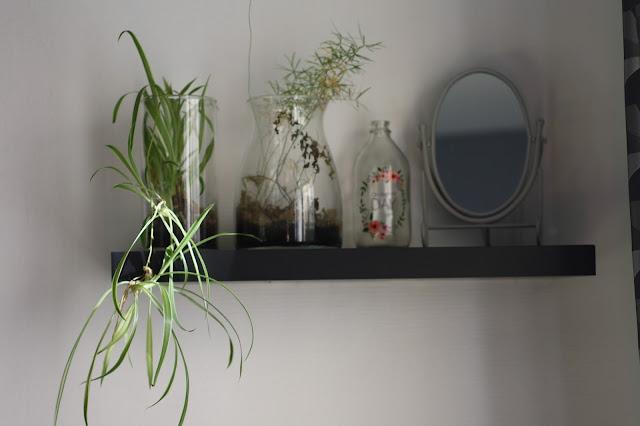 plantes vertes a la maison decoration inerieure