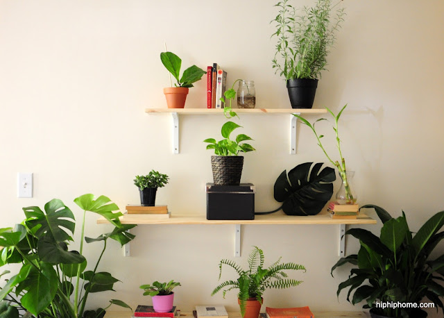 house plant display