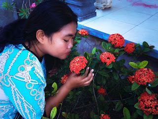 Kiss Red Asoka Flower Bloom Adorn The Yard Brahmavihara Arama Monastery North Bali