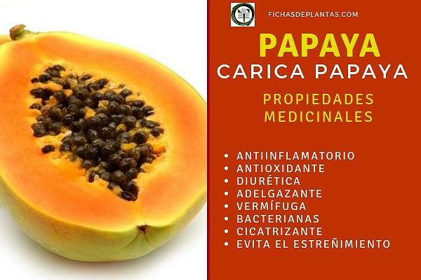 La Papaya tiene propiedades medicinales: antiinflamatorias, antioxidante, diuréticas, etc.