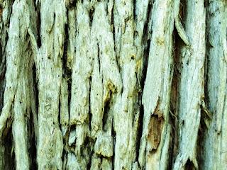 Casca de Tronco de Árvore no Parque Saint Hilaire, Viamão
