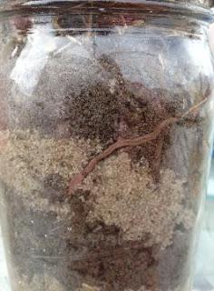 Percobaan Membuat Habitat Cacing Tanah