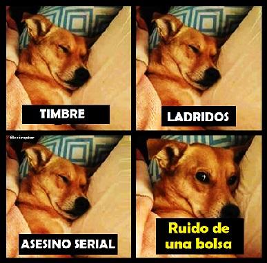 chiste-perro-humor