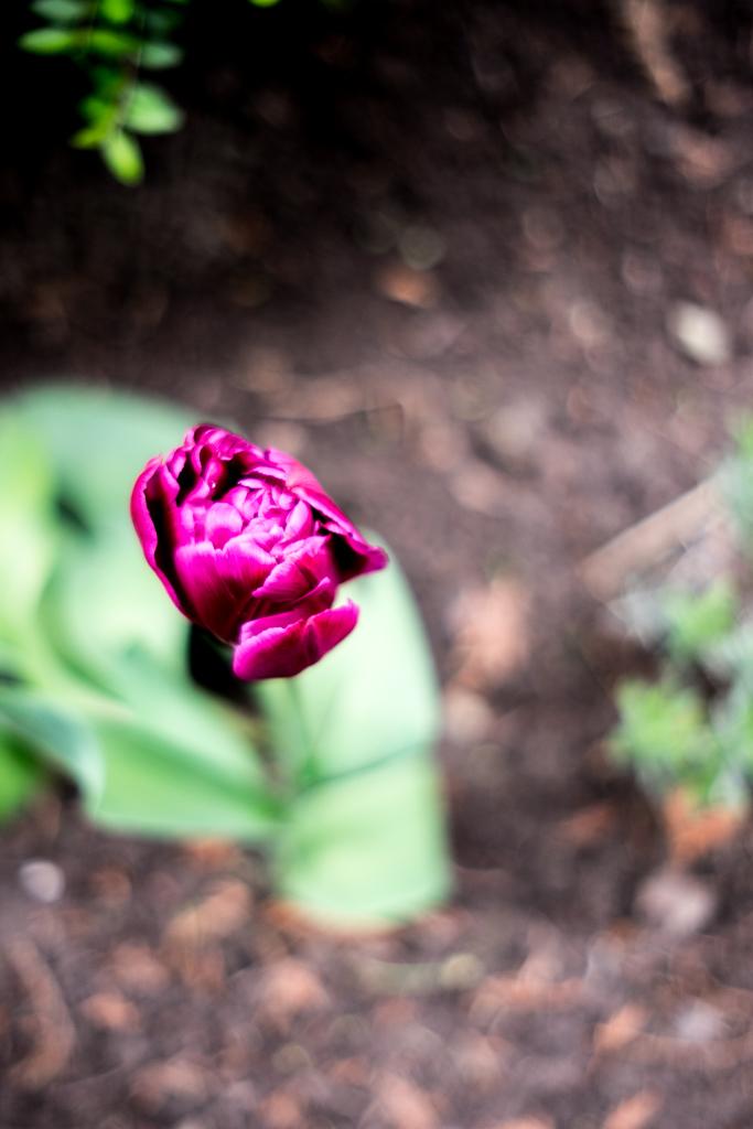 www.fim.works | Fotografie. Wortakrobatik. Wohngefühl. | Lifestyle-Blog | Gartenarbeit im Frühling