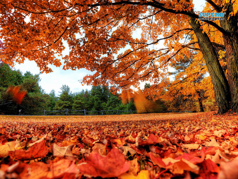 Labels Red Autumn Leaves Photography Hd Wallpapers For: Beautiful Wallpapers For Desktop: Red Autumn Leaves