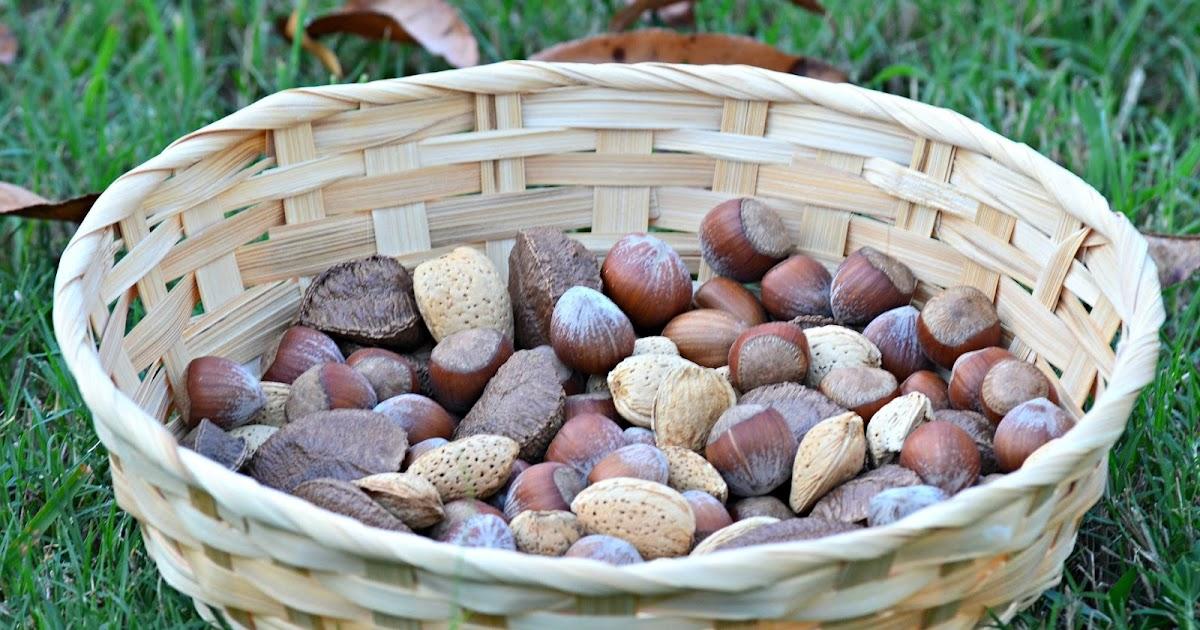 P te tartiner au chocolat noisettes mes soins aux ingr dients naturels - Bienfait de l aloe vera ...
