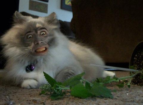Nicolas Cage Superimposed on Felines |The Odd Blogg