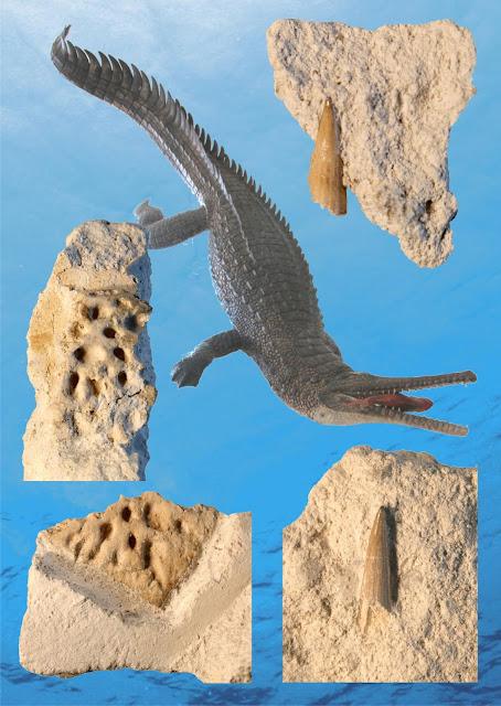 Remains of rare prehistoric crocodile found in Denmark