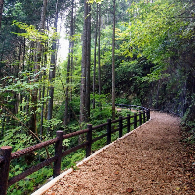 都民の森 大滝の路