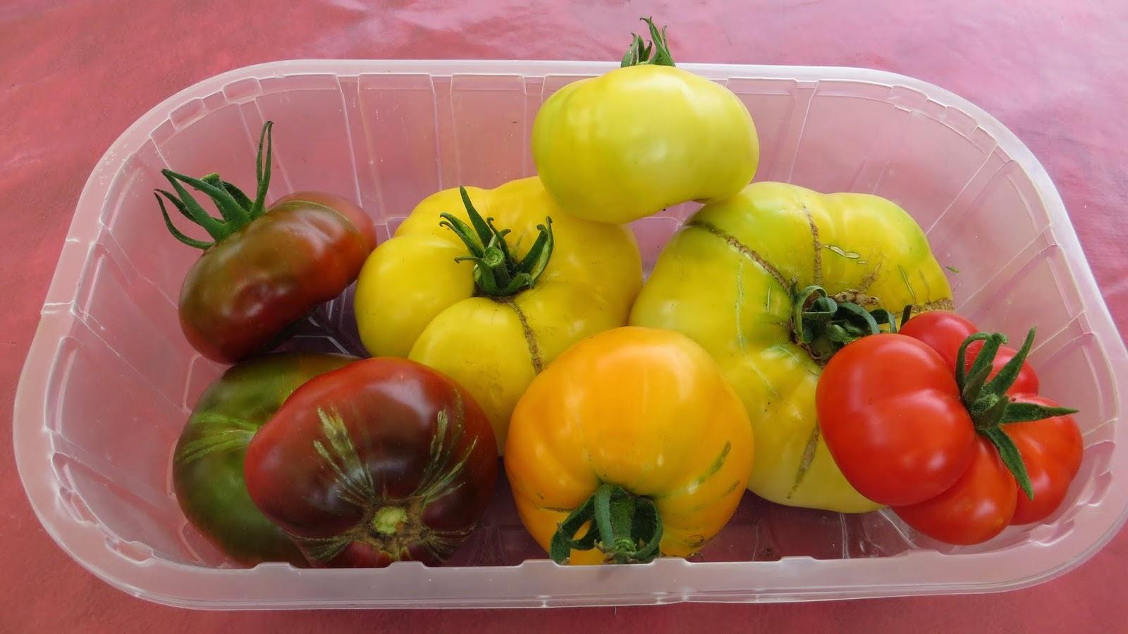 meine kleine welt die ersten reifen tomaten 2014. Black Bedroom Furniture Sets. Home Design Ideas