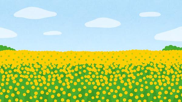 菜の花畑のイラスト(背景素材)