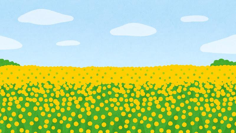 菜の花畑のイラスト背景素材 かわいいフリー素材集 いらすとや