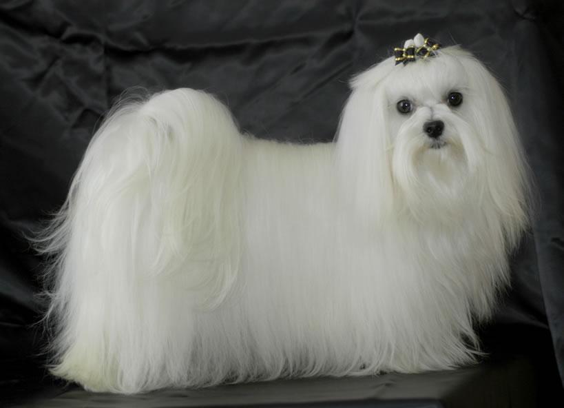De perro iv - 1 3
