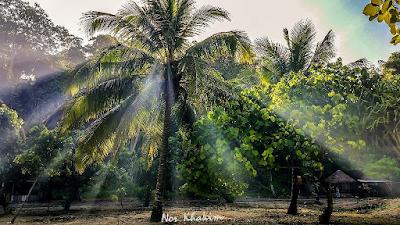 Beberapa pohon berjajar di sekitaran Pantai Goa Patuk Ilang. Foto oleh @khakim_sr
