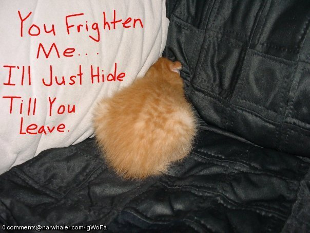 A Little Reality: The Cowardly MittensScared Kitten Hiding