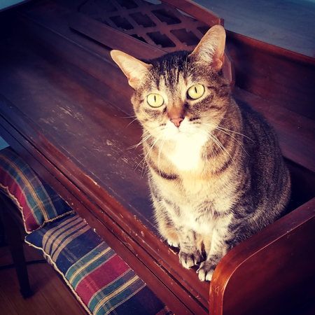 image of Sophie the Torbie Cat sitting on the piano