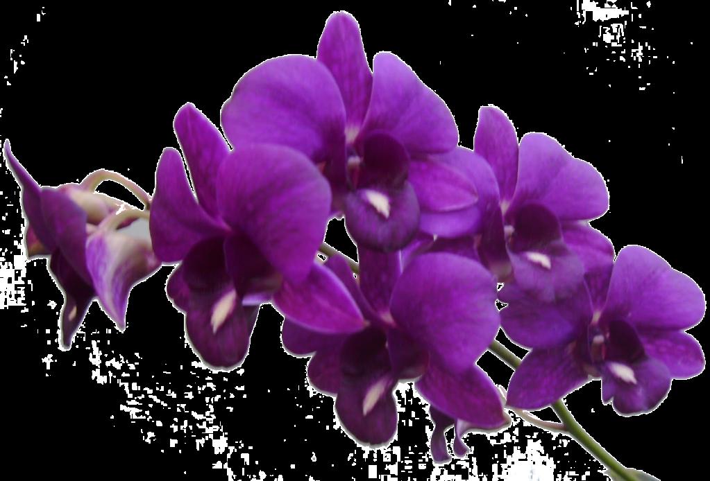 Flowers: Transparent Flowers - Birds II.