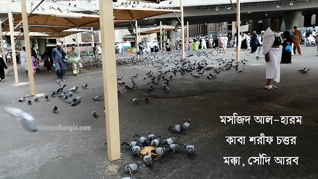 peace pigeons near masjid ul haram makkah