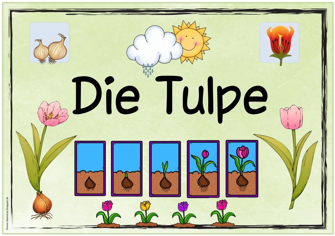 ideenreise themenplakat die tulpe. Black Bedroom Furniture Sets. Home Design Ideas