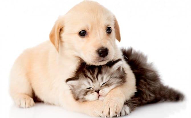 Mascotas, cachorros, animales
