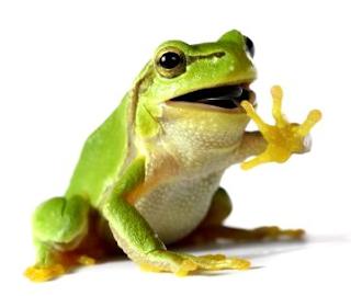 katak kecil pemberani