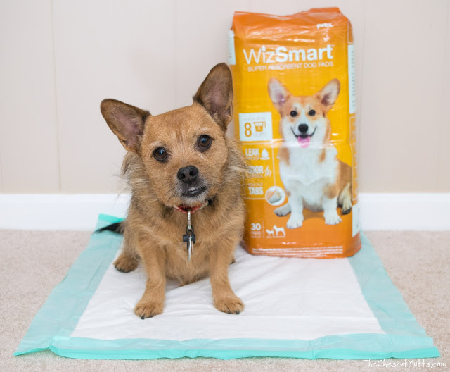 Jada and WizSmart Eco Friendly Pee Pads
