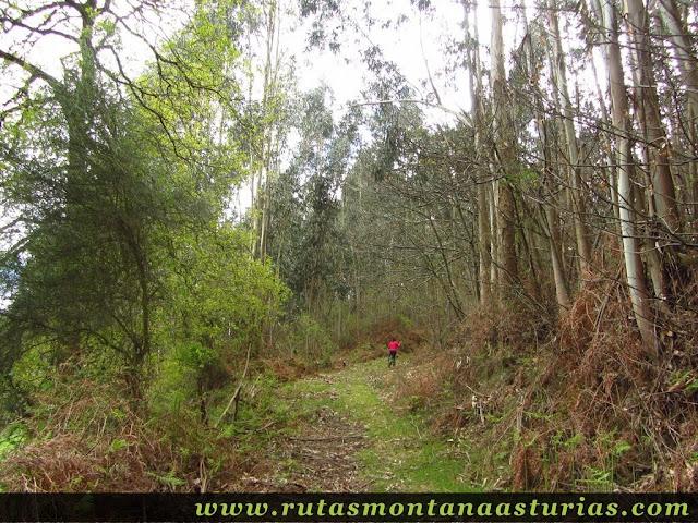 Atravesando bosque en el pico Prieto
