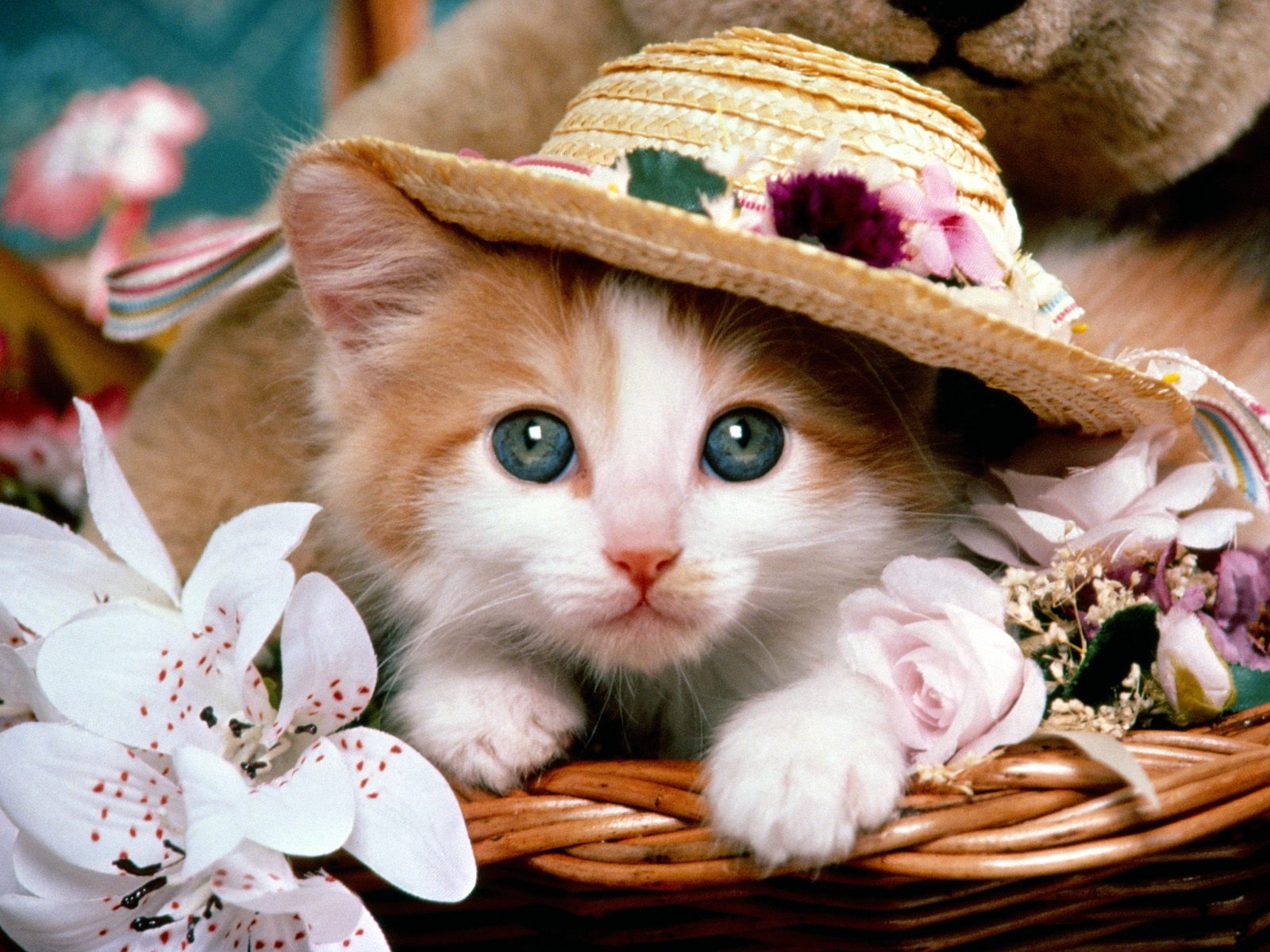 Wallpapers Dhamaka Cute Baby Cat With A Hat Wallpapers And Nice Pics Of Baby Cats And Cats Wallpapers