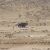 Avistan A Nave Extraterrestre Aterrizando En Desierto De Sahara