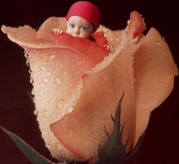 gül duvar kağıdı bebek
