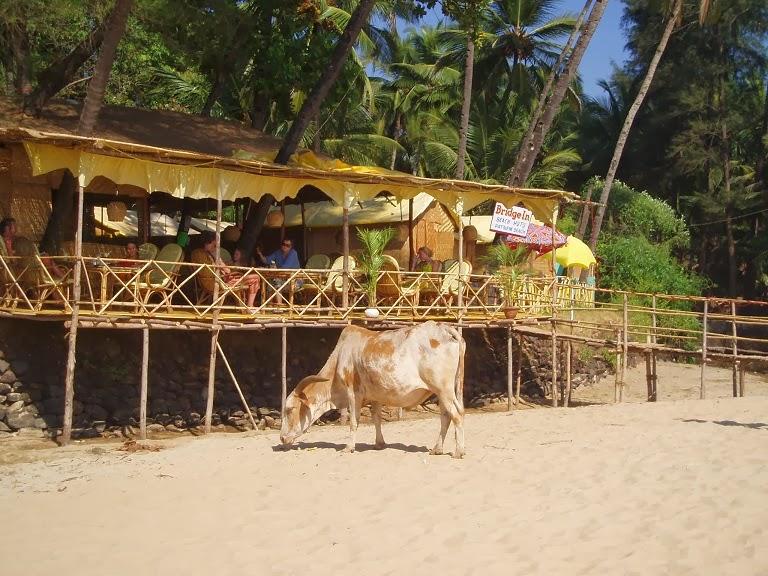 67d9d691bae Restaurang och kossa rakt utanför på stranden. Inget konstigt i Indien.  Samtliga foton: Bokcaféet i byn. Hej vänner! Hoppas ni haft en fin onsdag!