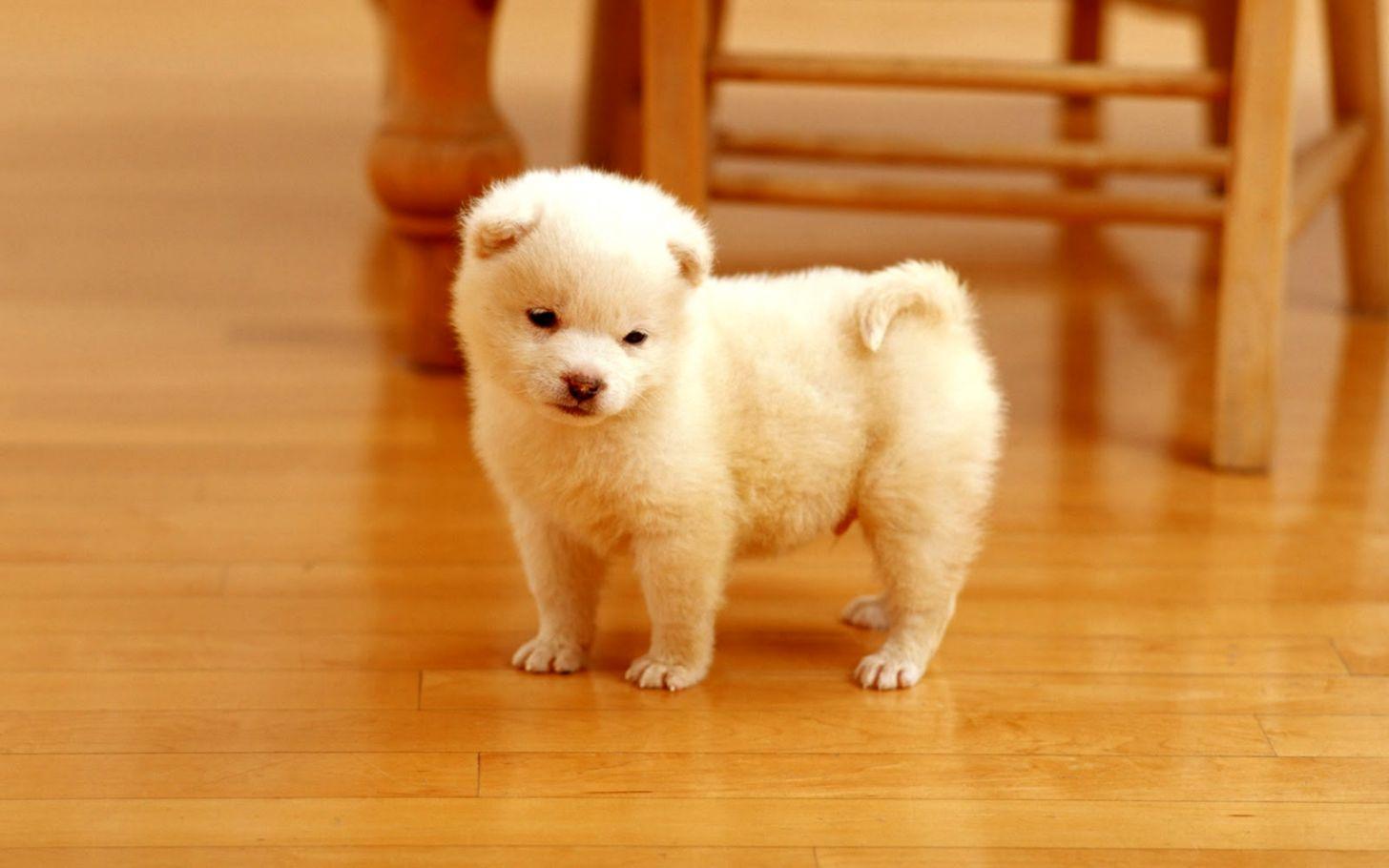 Ilmu Pengetahuan 10 Dog Images Free Download Hd