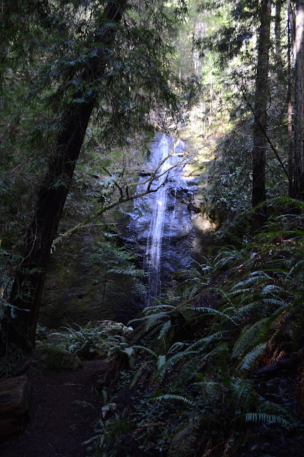 waterfall among ferns and such