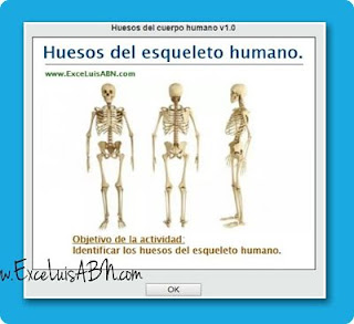 Huesos del esqueleto humano.