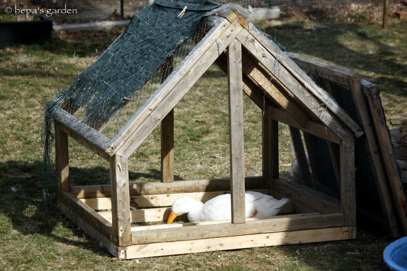Bepa S Garden A Duck House Made From Recycled Materials