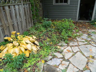 Leslieville Toronto Fall Cleanup Before by Paul Jung Gardening Services--a Toronto Gardening Services Company