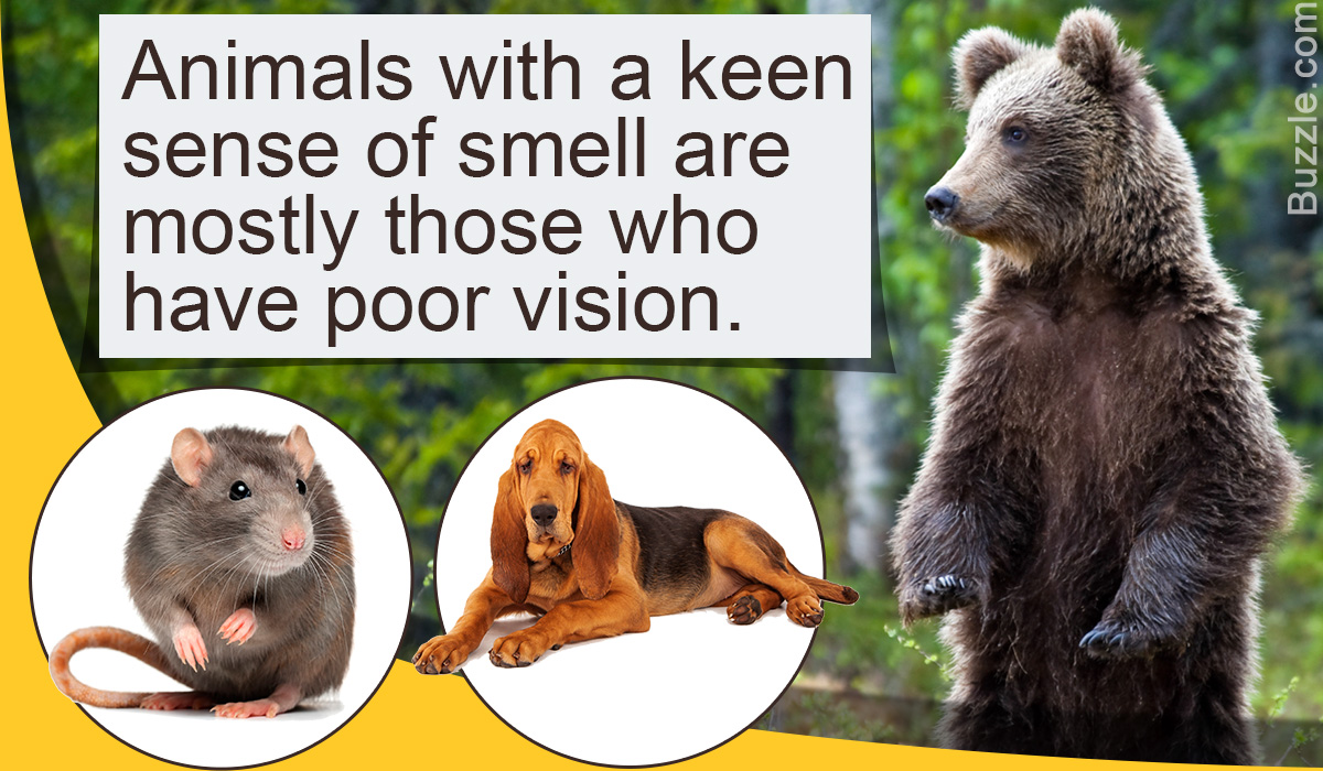 Every Day Is Special April 2018 Loop Kartini Gardens By The Bay Singapore Dewasa Here Are A Few Real World Examples Of Dogs Amazing Senses Smell
