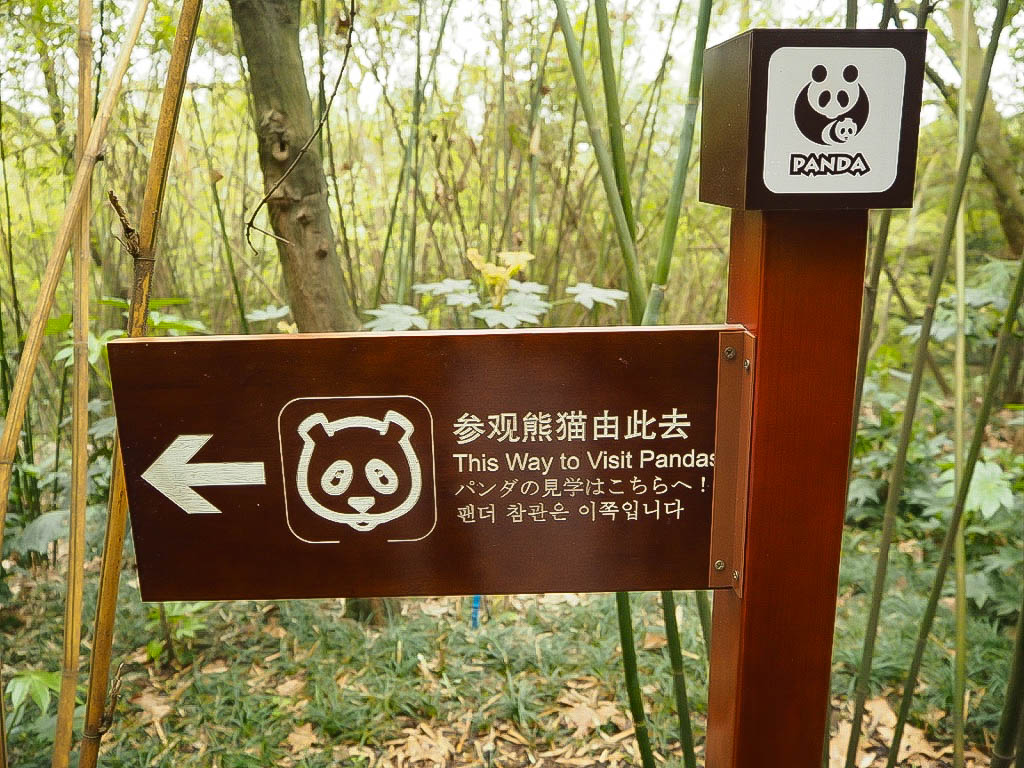 Chengdu Panda Sanctuary, China