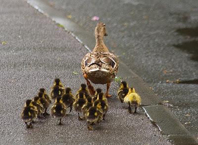 No more ducks for DA Sherri Tibbe